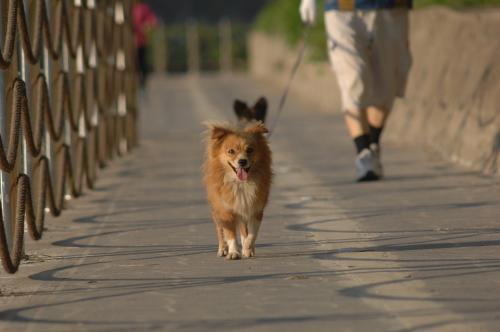 puppy-3400152_960_720